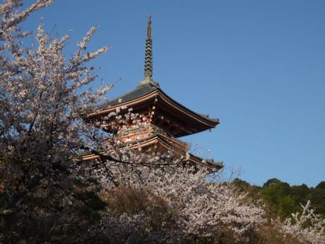 花見なので桜を入れてっと・・・三重塔をパチリ