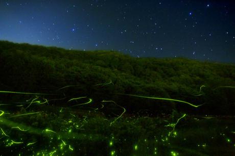 http://www.astroarts.co.jp/gallery/misc/200606/003072-j.shtmlから引用 タイトル:「星蛍競演」 撮影者:宮坂 雅博 氏