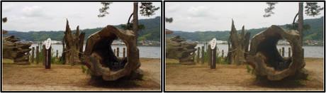 保存されている双龍の松 3D画像(平行法)