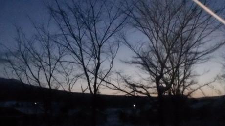 夜明け前の空をバックに木立が浮かび上がります