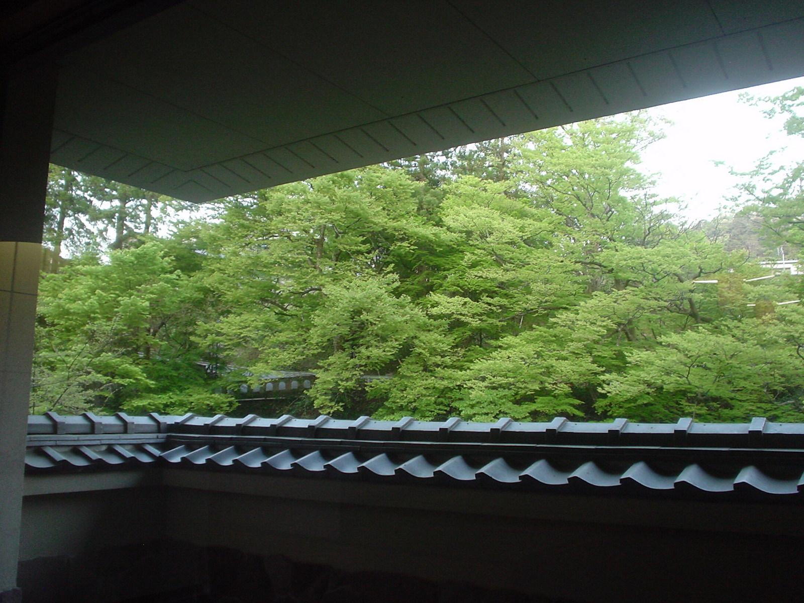 窓からは庭先の新緑がきれいです